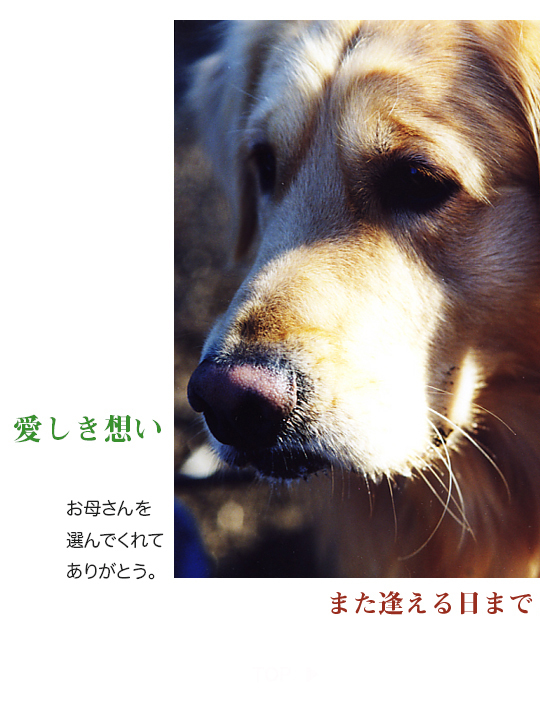 itoshikiomoi0-0.jpg