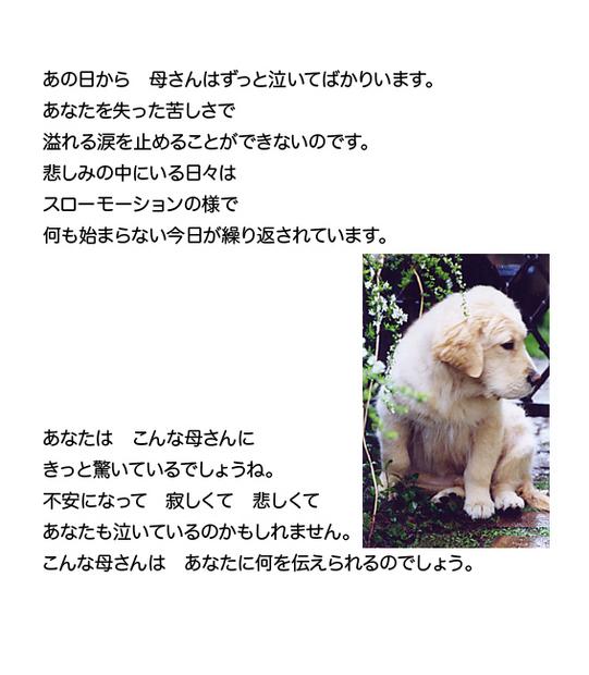 mataaeru4.jpg