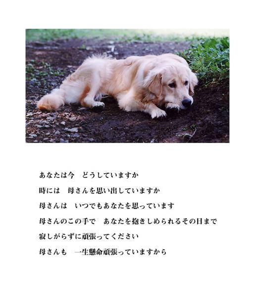 inochi-9.jpg