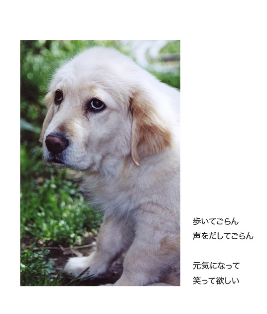 itoshikiomoi3-3.jpg